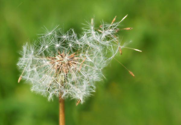 Asma allergico da pollini : quali sono i sintomi?