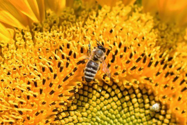 rinite allergica da pollini