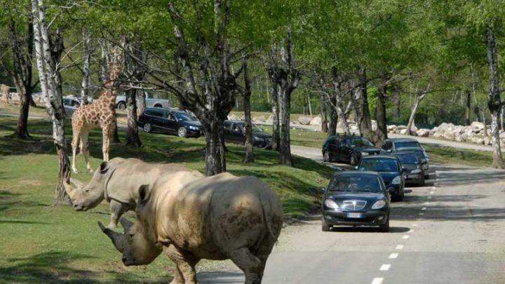 Safari Park: parco giochi di Varallo Pombia
