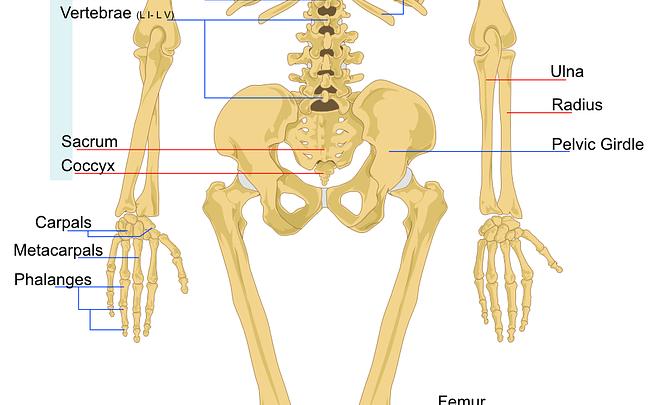 Come insegnare le parti del corpo umano